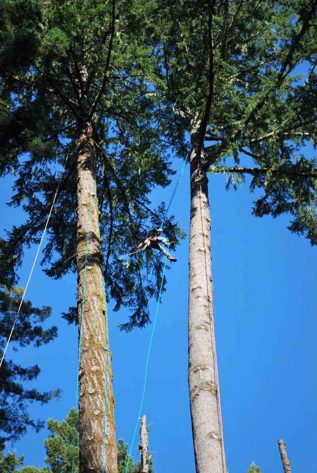 tree-to-shining-tree