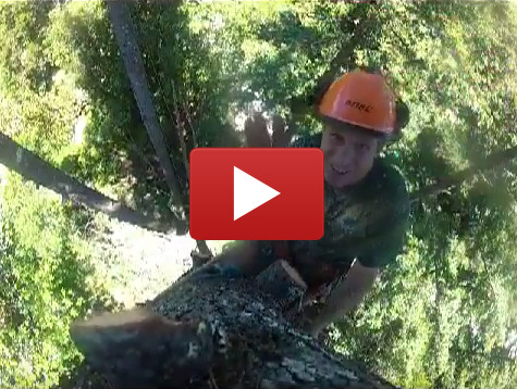 Bobby Topping Tree & 75 Foot Drop